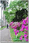 2010台大校園流蘇:DSC_1075.jpg