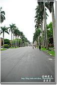 2010台大校園流蘇:DSC_1076.jpg
