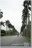 2010台大校園流蘇:DSC_1077.jpg