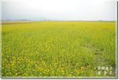池上_浮圳 大觀亭 油菜花:DSC_7543.jpg