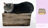 胖吉貓(Pusheen the cat):