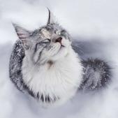 貓咪寫真: