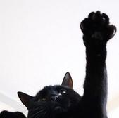 黑貓Guinness(ギネス):