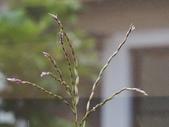 花花草草:412 (3).jpg