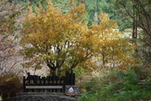 層楓武陵20141216:DSC_0361.JPG