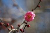 層楓武陵20141216:DSC_0363.JPG