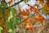 層楓武陵20141216:DSC_0379.JPG