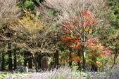 層楓武陵20141216:DSC_0303.JPG