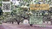 香柚MARK 俊 在花蓮:2015-08-12-12-58-54-411.jpg