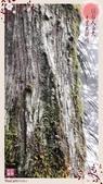 噶瑪蘭中海拔之旅:2014-11-11-19-48-08-541.jpg