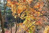 層楓武陵20141216:DSC_0332.JPG