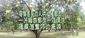 香柚MARK 俊 在花蓮:2015-08-15-12-00-10-405.jpg