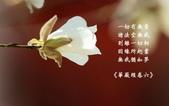 心靈甘露:flower010.jpg