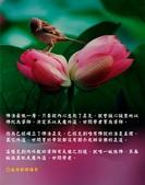 心靈甘露:鳥語花~1.JPG