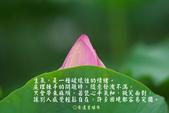 心靈甘露:12563I450-0_meitu_1.jpg