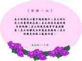 心靈甘露:214737274_x.jpg