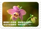 心靈甘露:professional_lower_photography_162851.jpg