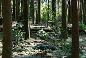 坪林翡翠山林民宿:是個可以讓孩子認識大自然的好地方
