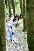 坪林翡翠山林民宿:杉木林中還設有盪鞦韆