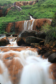 金瓜石-黃金瀑布奇觀:6.JPG