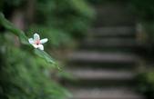 台北都會最近的賞桐去處 - 土城桐花公園:16.JPG