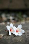 台北都會最近的賞桐去處 - 土城桐花公園:土城桐花公園 - 依偎