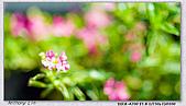 大安森林公園台北花卉展:DSC07545ss.jpg