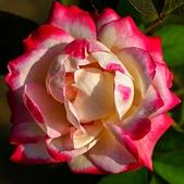 士林官邸 玫瑰:DSC08704.jpg