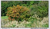 陽明山楓葉--略紅:DSC07004.jpg