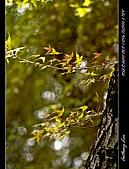 春一番:DSC01852.jpg