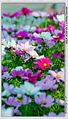 大安森林公園台北花卉展:DSC07551ss.jpg