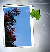 拍攝淡水景點+ nEO框:DSC02005.jpg