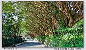 陽明山楓葉--略紅:DSC07017.jpg