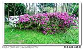 榮星花園杜鵑花開:DSC02646.jpg