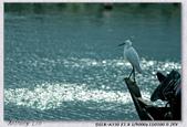 350 +小白 拍淡水:DSC00831.jpg