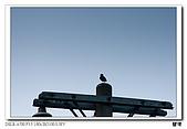 關渡旅拍:DSC01577.jpg