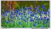 大安森林公園台北花卉展:DSC09521dd.jpg
