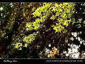 春一番:DSC01854.jpg