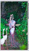 熊貓來前夕 走拍動物園:DSC09356.jpg