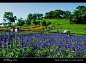 大溪花海農場:DSC05946-2.jpg