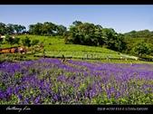 大溪花海農場:DSC05949-2.jpg