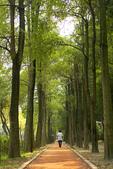 2008 台北好精彩 + 2008 傳藝遊園之美 攝影比賽 :DSC01837  都市森林浴