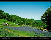 大溪花海農場:DSC05955-2.jpg