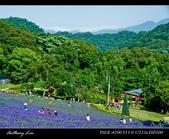 大溪花海農場:DSC05956-2.jpg