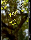 春一番:DSC01857.jpg