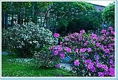 台大校園:DSC05804.jpg
