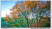 陽明山楓葉--略紅:DSC06931.jpg