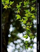 春一番:DSC01858.jpg