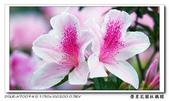榮星花園杜鵑花開:DSC02582.jpg