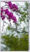 大安森林公園台北花卉展:DSC09580dd.jpg